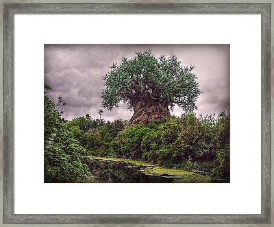 Framed Print featuring the photograph Tree Of Life by Hanny Heim
