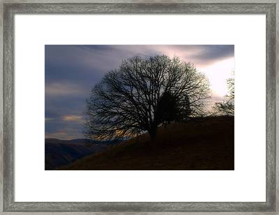 Tree Of Life Framed Print by Heather L Wright