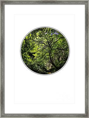 Tree Of Life Framed Print by Holly Martin