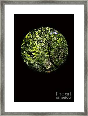 Tree Of Life II Framed Print by Holly Martin