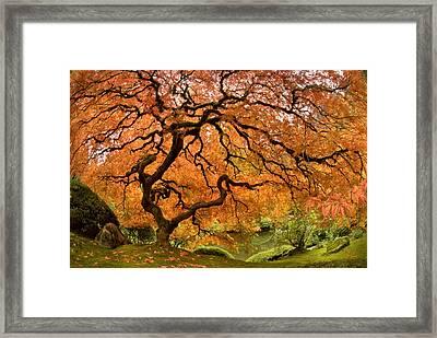 Tree Of Life Framed Print by Lori Grimmett