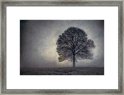 Tree Of Life Framed Print by Scott Norris