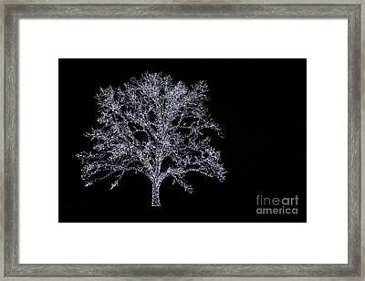 Tree Of Light Framed Print