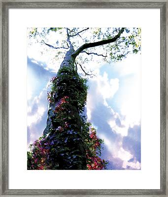 Optimistic Framed Print