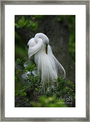 Framed Print featuring the photograph Tree Of Plumes by John F Tsumas