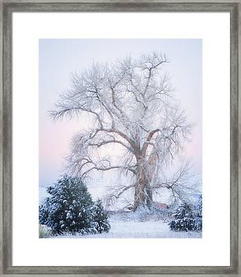 Tree Of Snow Framed Print by Darren  White