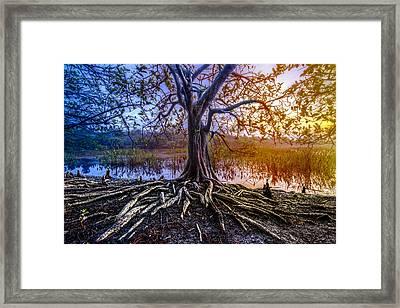 Tree Of Souls Framed Print by Debra and Dave Vanderlaan