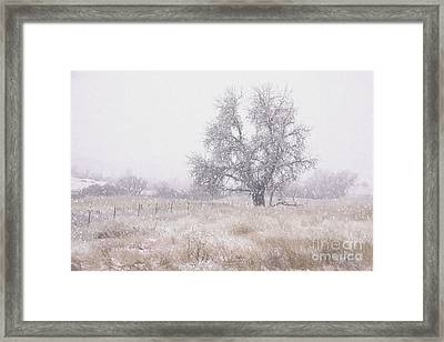 Tree Of Storm Framed Print