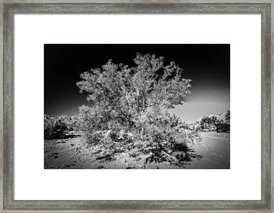 Tree Of The Desert Framed Print