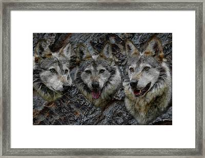 Tree Of Wolves Framed Print by Ernie Echols
