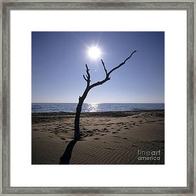 Tree On A Beach Framed Print