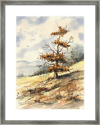 Tree On A Hillside Framed Print by Sam Sidders