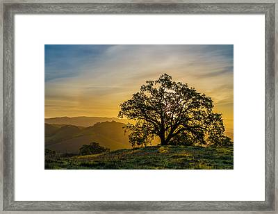 Tree On A Ridge Framed Print by Sarit Sotangkur