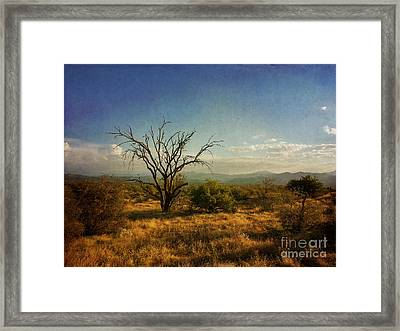Tree On Caballo Trail Framed Print by Marianne Jensen