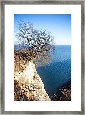 Tree On Chalk Cliff Framed Print by Ralf Kaiser