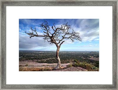 Tree On Enchanted Rock Framed Print