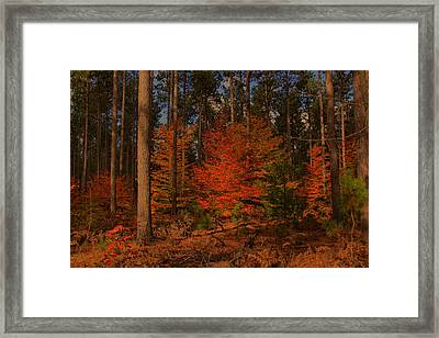 Framed Print featuring the photograph Tree On Fire by Michaela Preston