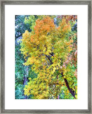 Framed Print featuring the photograph Tree On Fountain Creek by Lanita Williams