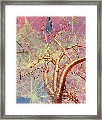 Tree On Leaf Framed Print