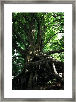 Tree On Pierce Stocking Scenic Drive Framed Print by Michelle Calkins