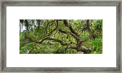 Tree On South Creek In Oscar Scherer Framed Print by Panoramic Images