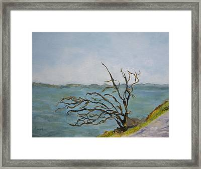 Tree On The Hudson River Framed Print