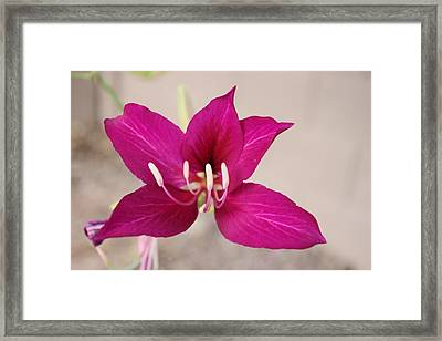 Tree Orchid Framed Print
