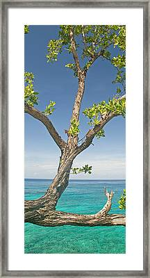 Tree Overhanging Sea At Xtabi Hotel Framed Print by Panoramic Images