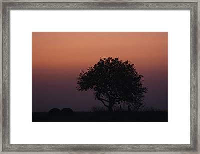 Tree Framed Print by Paula Brown