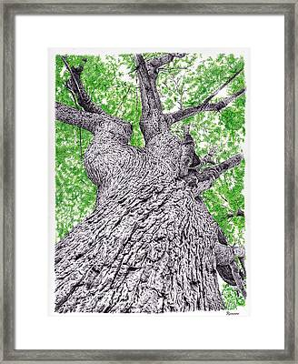 Tree Pen Drawing 4 Framed Print