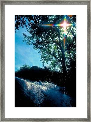 Tree Planted By Streams Of Water Framed Print