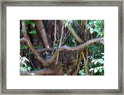 Framed Print featuring the photograph Tree by Rafael Salazar