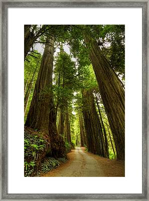Tree Redwood Ca 3 Framed Print by John Brueske