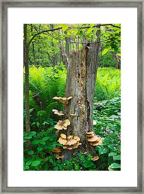 Framed Print featuring the photograph Tree Remnant by Lars Lentz
