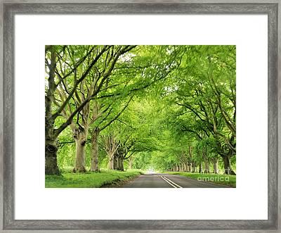 Tree Avenue Framed Print by Katy Mei