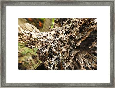 Tree Root Framed Print by Eyzen M Kim