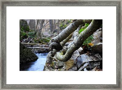 Tree Roots Framed Print by Charline Xia