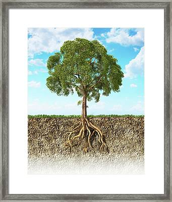 Tree Roots In The Soil Framed Print by Leonello Calvetti