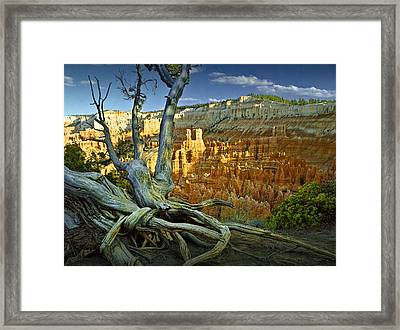 Tree Roots On A Ridge In Bryce Canyon Framed Print