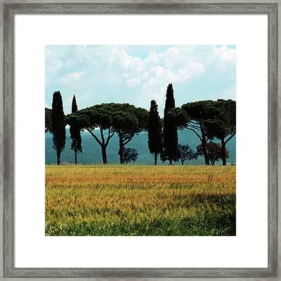 Tree Row In Tuscany Framed Print by Heiko Koehrer-Wagner
