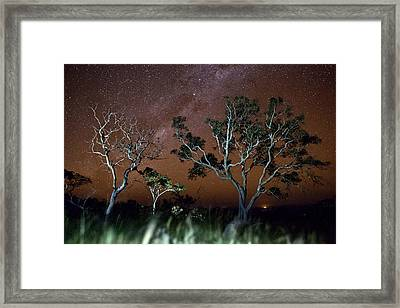 Tree Savanna On The Serrania De Chiquitos Bolivia Framed Print by Dirk Ercken