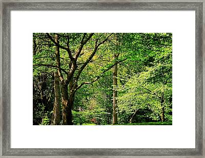 Framed Print featuring the photograph Tree Series 3 by Elf Evans