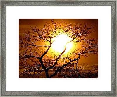 Tree Set Framed Print