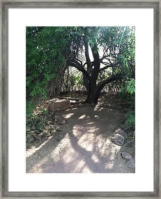 Tree Shadow Framed Print by Jack Edson Adams