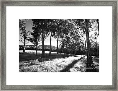 Tree Shadows Framed Print by David Benson