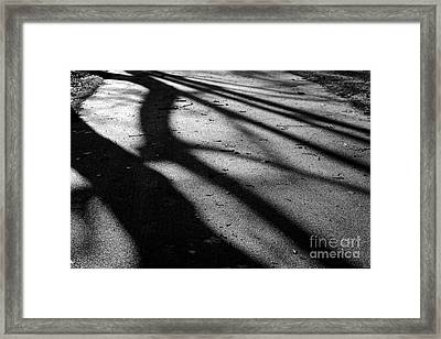 Tree Shadows Framed Print by Paul Muscat
