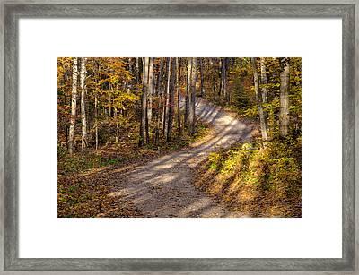 Tree Shadows Framed Print by Rob Huntley