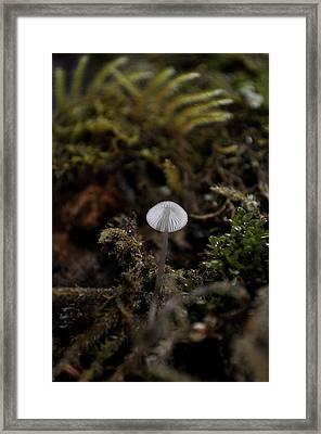 Tree 'shroom Framed Print
