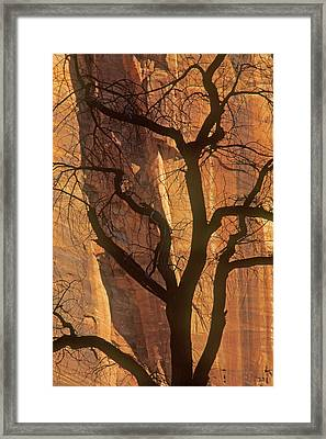 Tree Silhouette Against Sandstone Walls Framed Print