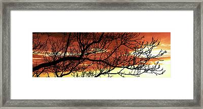 Tree Silhouette At Sunset, Warner Framed Print by Panoramic Images